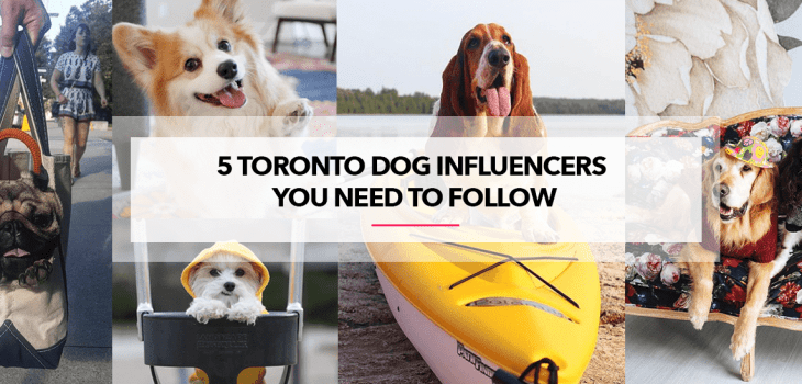 instagram dogs to follow