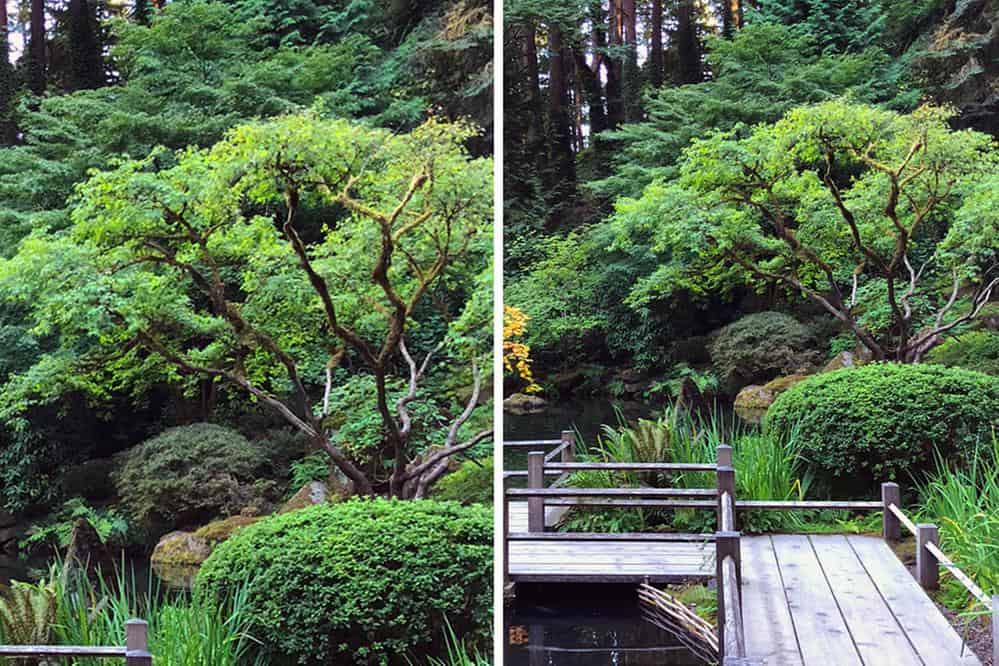 Image of trees, left. Image of trees with boardwalk, right.