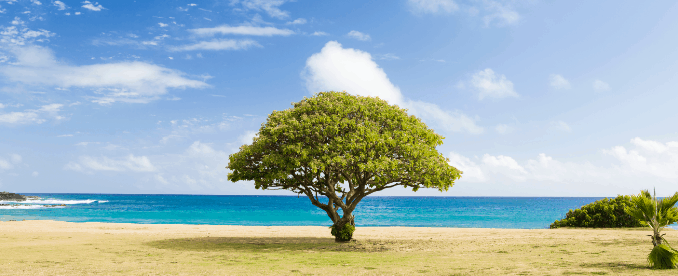 Does A Linktree Negatively Impact Your Website