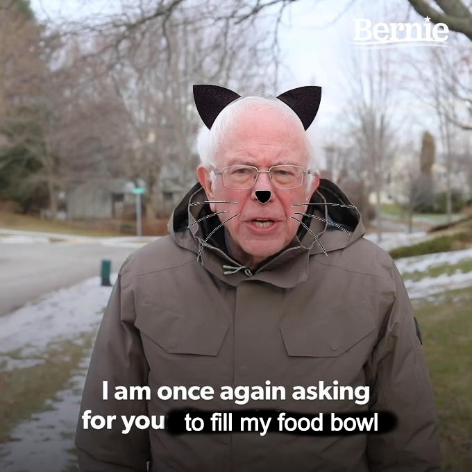 """Bernie Sanders as a cat with the words """"I am once again asking for you to fill my food bowl"""""""